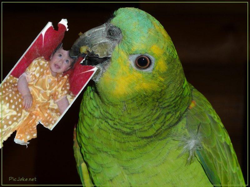 Fotomontaje gratis con un loro o papagayo