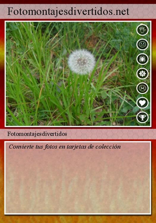 Convierte tus fotos en tarjetas de colección