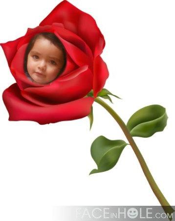 Fotomontaje gratis en una rosa roja
