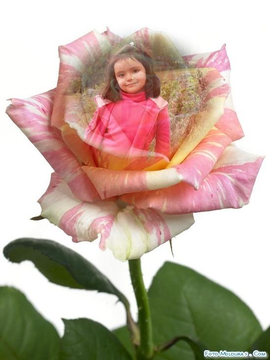 efecto para foto gratis en una rosa