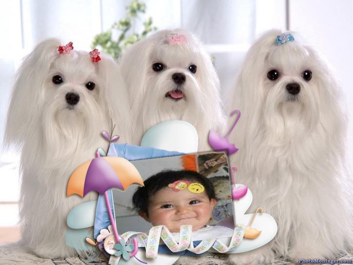 Marco de fotos con perros