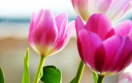 Fondos de flores-01