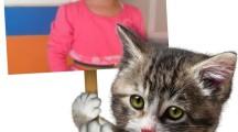 Marco de fotos infantiles con animales