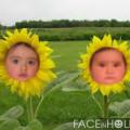 Fotomontaje gratis en flores de girasol