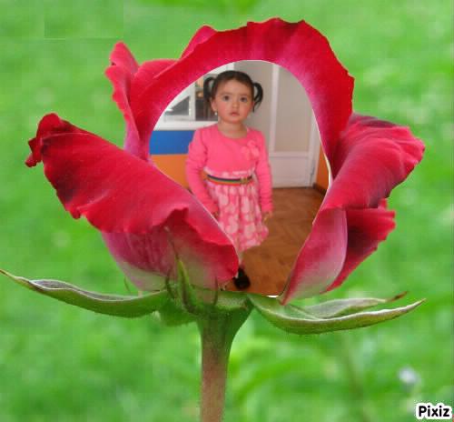 Fotomontajes De Amor Con Rosas Fotomontajes Divertidos