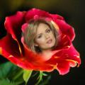 Decora tu foto con esta preciosa rosa roja