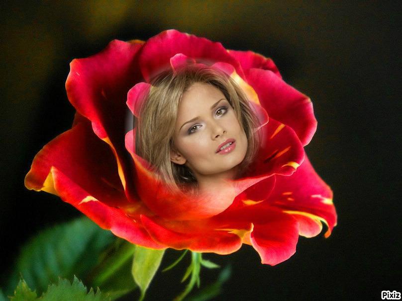 Decora Tus Fotos Con Esta Increíble Rosa Roja Fotomontajes Divertidos