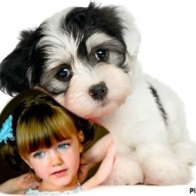 Fotomontaje con tierno fotomontaje para fotos