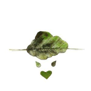 crea mensajes con hojas de árboles caidas-01